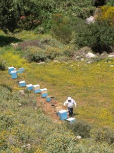 Bienenkästen in Kretas Bergwelt