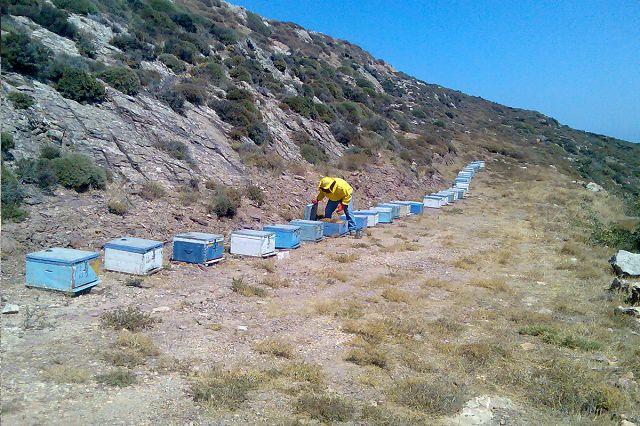Bienenstöcke in Ostkreta